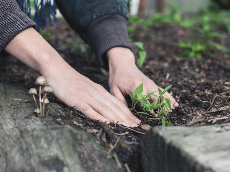 voucher na projekt ogrodu - aranżacja małego ogrodu