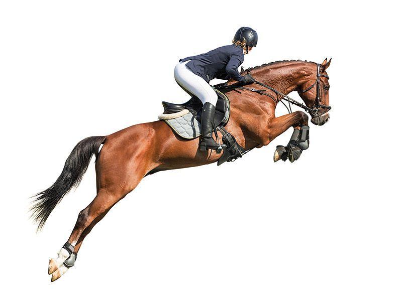 nauka jazdy konnej w prezencie